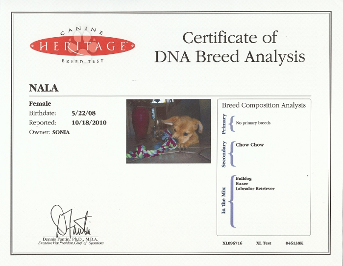 Does dna testing for dogs work for Where to go for dna testing