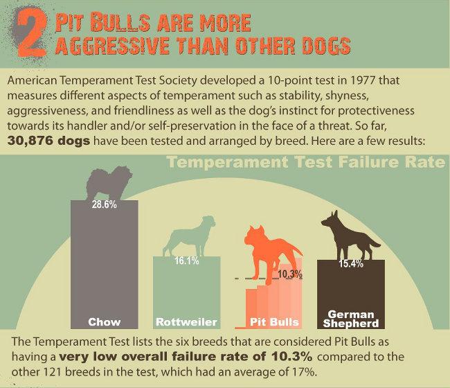 Are Pit Bulls Dangerous Shattering 5 Pit Bull Myths