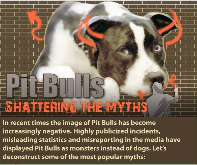 Inforgraphic Are pit bulls dangerous