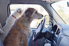 best car for dogs