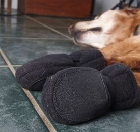 No Slip Indoor Dog Boots Save Your Floors