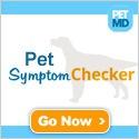 Pet symptom checker