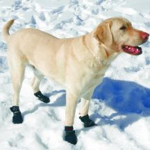 Dog Boots For Snow