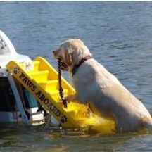 Dog Boat Ladder