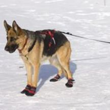 Skijoring Harness