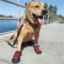 Water Shoes For Dogs
