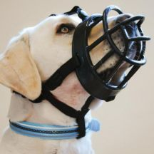 Dog Muzzles That Allow Drinking