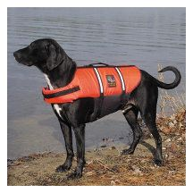 Dog Water Safety