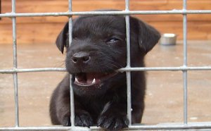 puppy biting fence