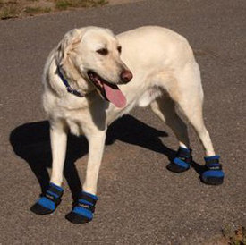 dog boots keep paws cool